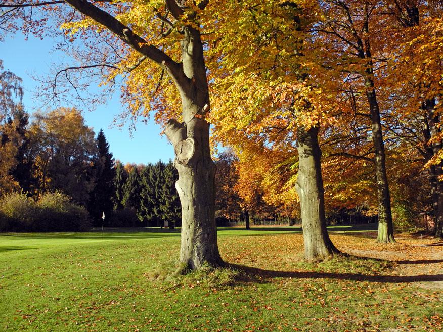 Golfen im Herbst
